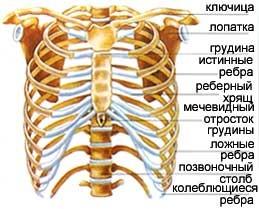 Дырка между ребрами