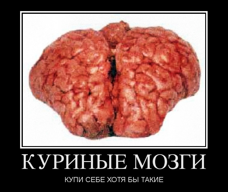 мониторе присутствует мозгов нету фото нас тоже
