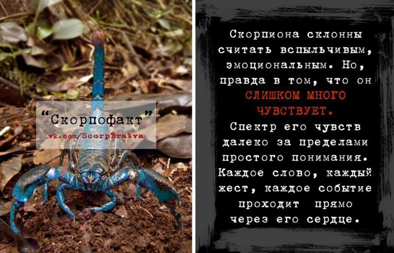 Как создать, прикольные картинки с скорпионами