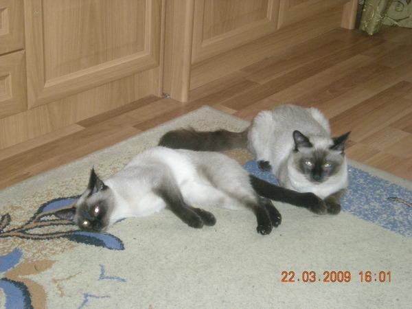 на какой день сводить кошку с котом