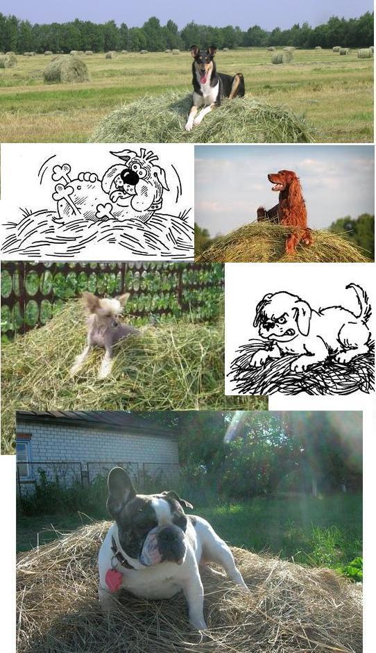 ПОЖАРНОЙ мужчина ведет себя как собака на сене домаЕсть противопоказания