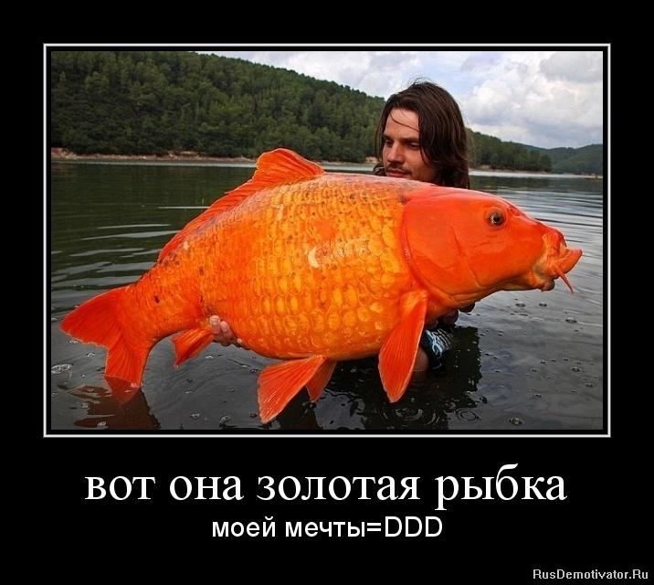 Золотая рыбка прикол картинка, древом