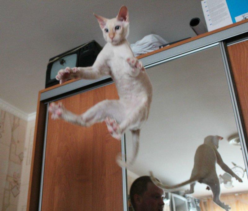 Ответы@mail.ru: как надо прыгать со шкафа?.