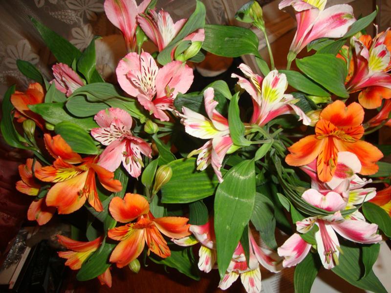 Дикая орхидея — Википедия
