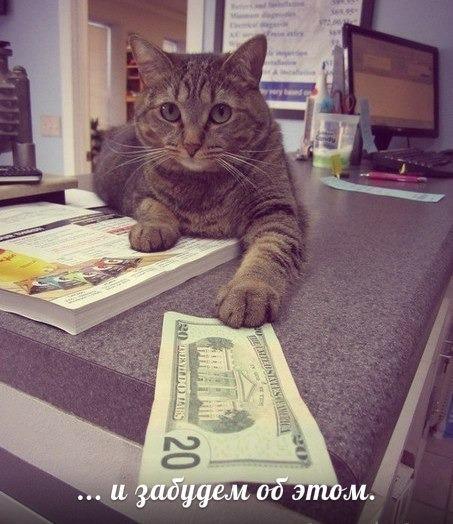 Дмитрий кот email address - 3