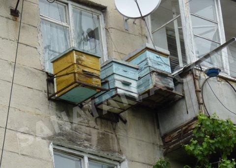 Ответы@mail.ru: если завести.. трёх поросят на балконе.. что.