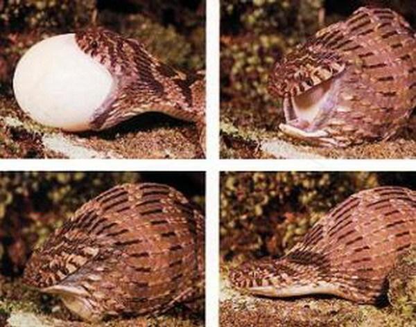 Проглатывает с яйцами фото 317-53