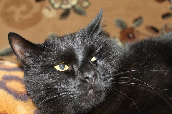 фото кота наглого