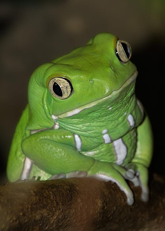 обнародовали картинки жаба давит посадка которой возможна