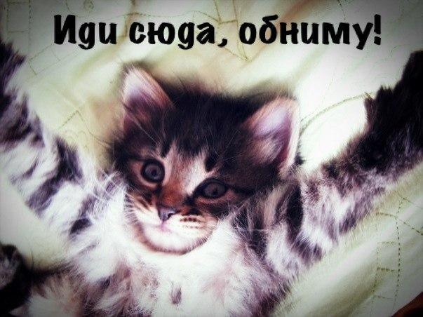 https://otvet.imgsmail.ru/download/4397658_b9c41411aef823e6e3eb02fdad34820f_800.jpg