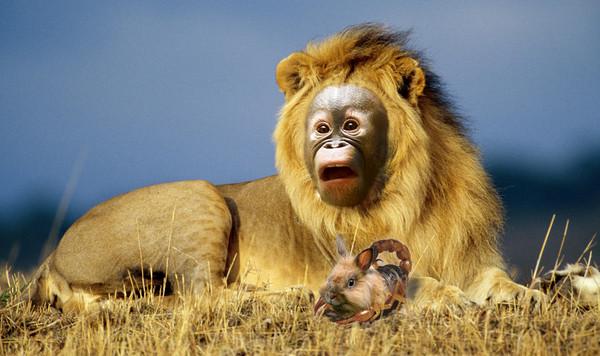 Обезьяна со львом картинка
