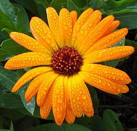 Как называется оранжевый цветок