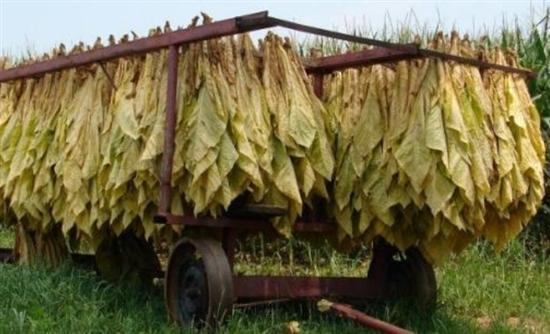 пошаговый рецепт как правильно сушить листья табака соглашаетесь условиями использования