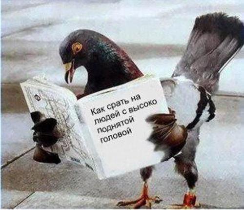 """""""Кремль пытается показать, что Украина - провокатор, а Россия - голубь мира"""", - Тука о """"крымских терактах"""" - Цензор.НЕТ 8085"""