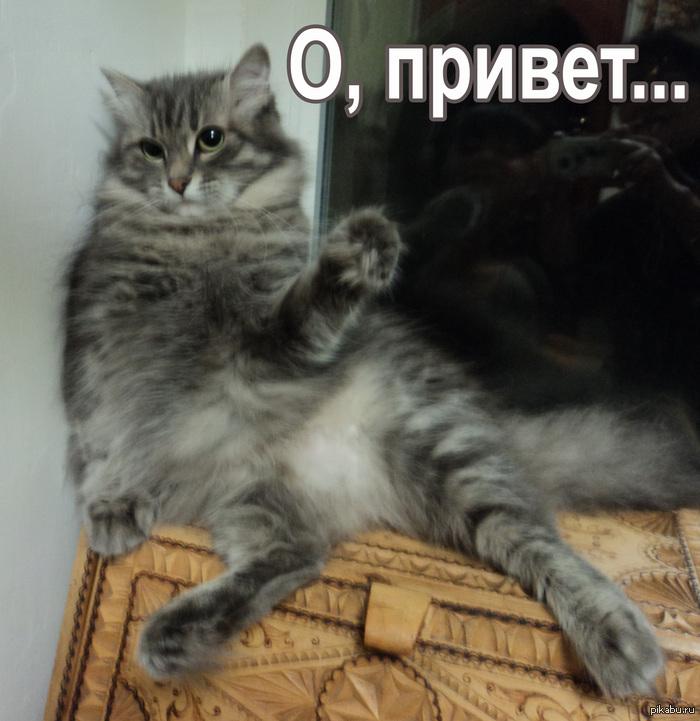 Картинка кота с надписью о привет