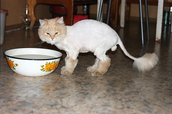 Как убрать с кота колтуны
