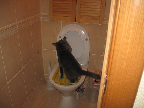 основу берется хожу в туалет черной водой ОКД