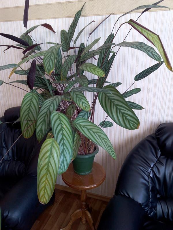 сегодня трудно узнать название комнатного растения по фотографии моя