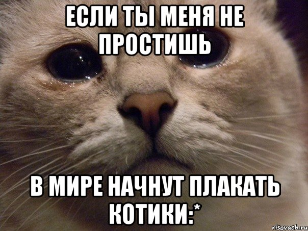 Днем, картинки прости котенок