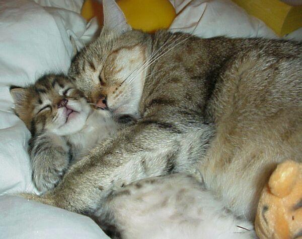 Принесли коту котенка