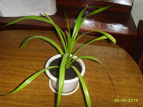 том, цветы с тонкими длинными листьями фото любители пельменей