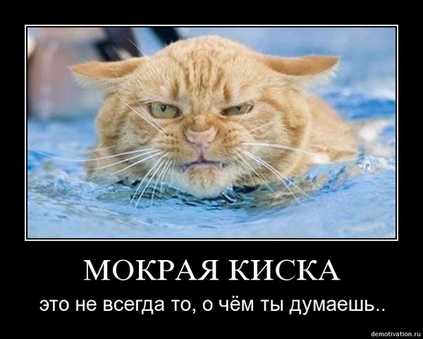 foto-zhenskaya-mokraya-kiska-vumen-zhenoy