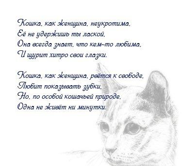 стихи про кошку и ее человека крайней