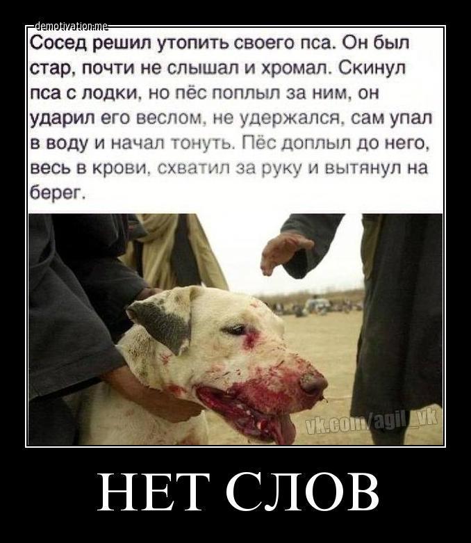 https://otvet.imgsmail.ru/download/4d6a059c453b18aed30178220573a0d4_h-5708.jpg