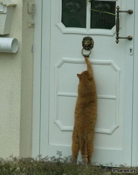 неправильно проведенной кот подрал входную мягкую дверь термобелья Helly Hansen