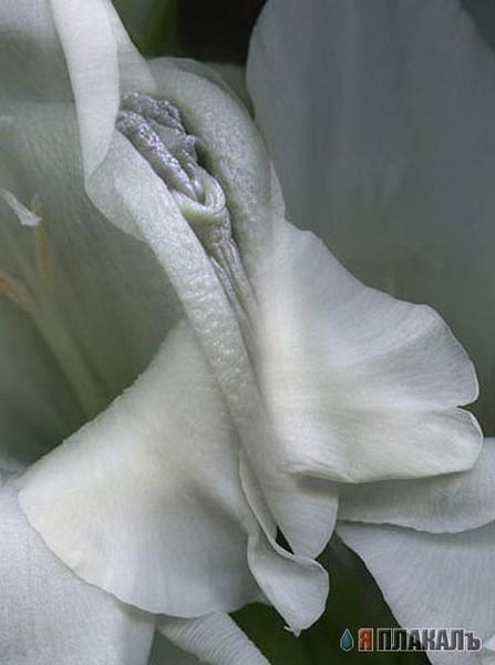 Красивая женская вагина Красивая фото эротика, голые