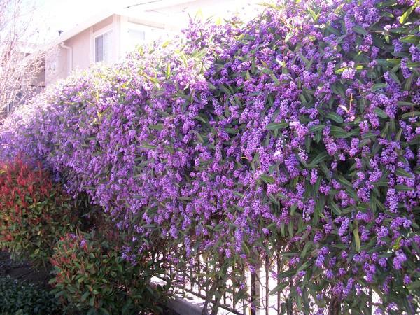 что начинает цвести в апреле аллергия