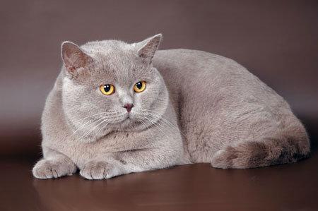 настюша котик