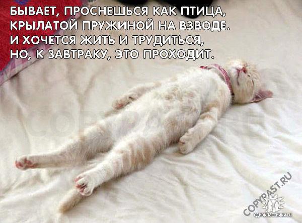 cat md5150