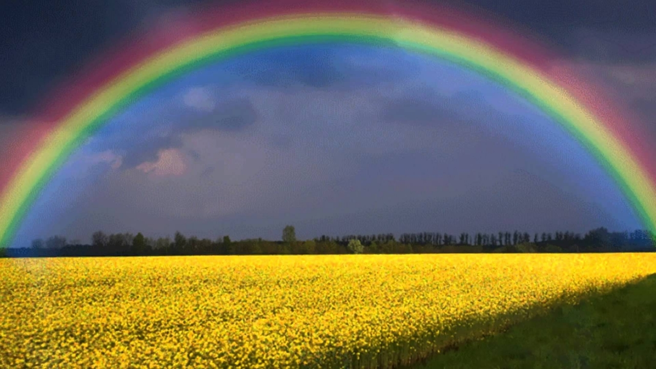 Анимация радуга над полем
