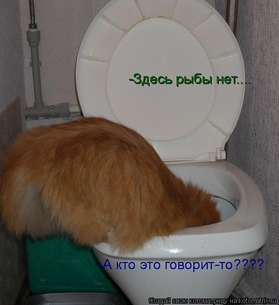 ribi-zhivushie-v-tualete