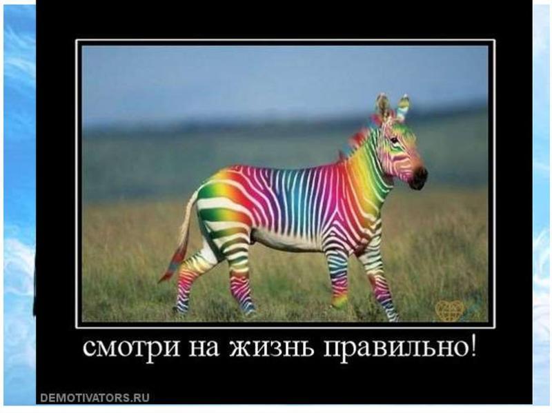 покажи картинки зебры как ее любить а не говори здесь можно буквальном