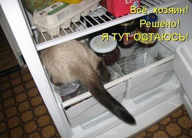 Делаем открытку из того что есть в холодильнике, студента картинки фото