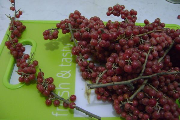 бузина ягода фото