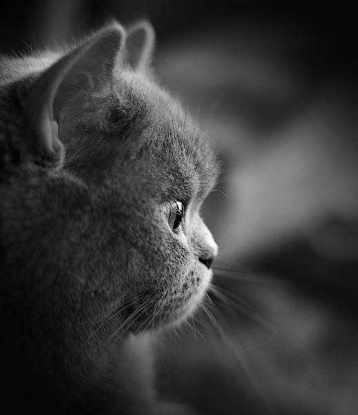 Картинки с котами скучаю