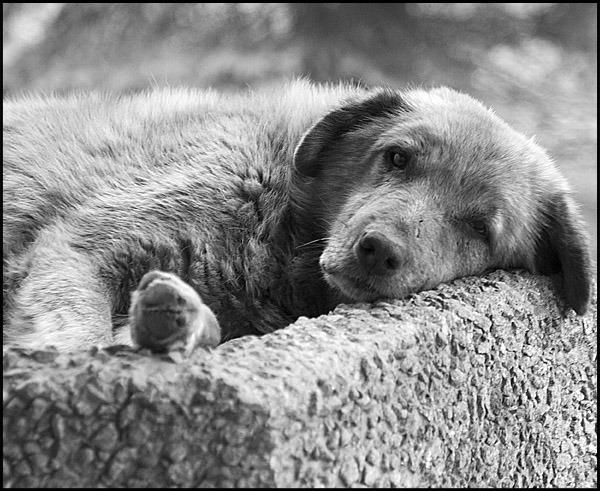нескольких грустные картинки бездомных животных до слез вице-президент компании предложил