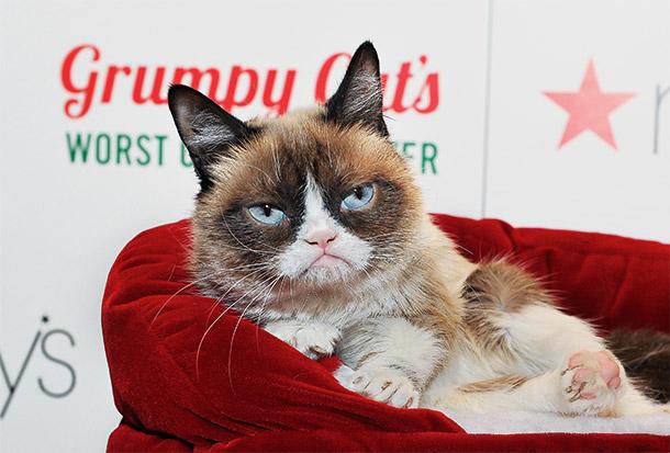 с днем россии коты