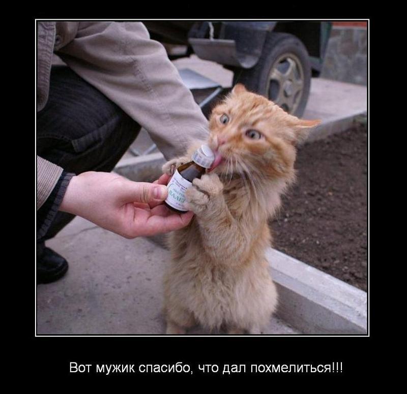 Спас кота я выполнил приказ