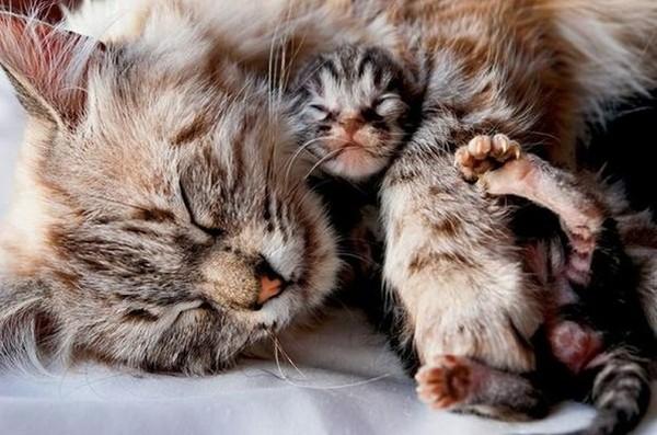 kitten health tips
