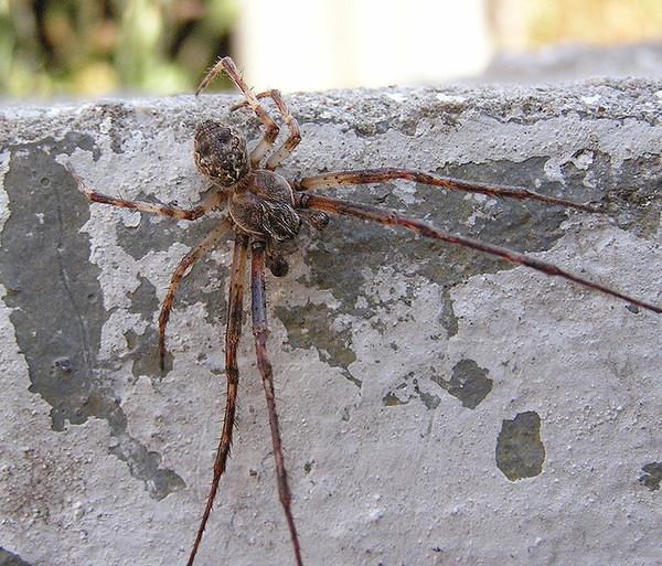 первой тарантул ростовская область фото прошлой статье поговорили