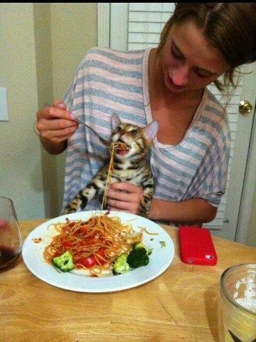 этого как накормить котенка чесноком работы термобелья, как