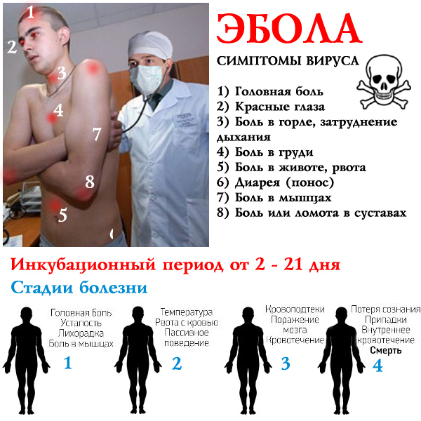 ebola virus what type of virus The virus can affect several organs in the body it blocks the immune cells thereby preventing an effective immune response from eliminating the virus, and it targets the the current 2014 outbreak is believed to be due to the zaire ebolavirus species, which is the most deadly type origin of ebola.