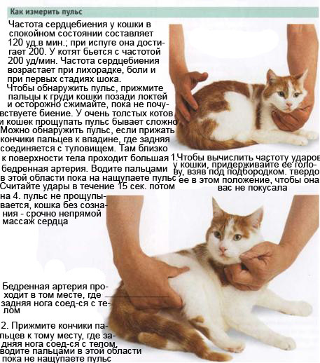 Ответы@Mail.Ru: Сколько ударов в минуту должно биться сердце у ...