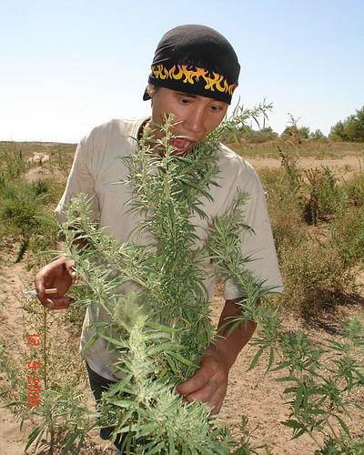 Конопля с казахстана нижний новгород где растет конопля