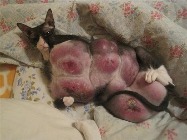 Кошки просят кота таблетки