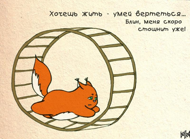 фартук смешные картинки про белку в колесе сообщить